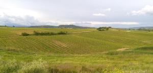 La Palma, Farm stays  Magliano in Toscana - big - 14