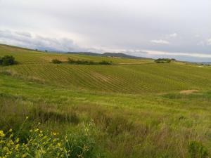 La Palma, Farm stays  Magliano in Toscana - big - 33
