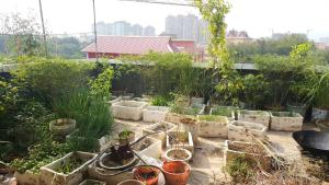 Jing Xiang Hostel, Hostels  Jinghong - big - 9