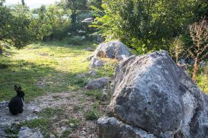 Agrotourism Matusko - фото 19