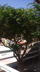 Pousada Arraial do Cabo, Vendégházak  Arraial do Cabo - big - 150
