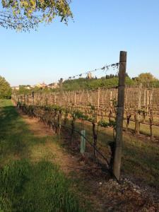 Agriturismo La Torretta da Valentina, Farmy  Solferino - big - 39