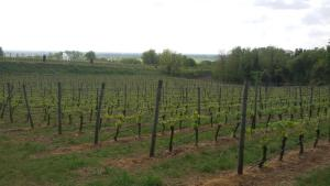 Agriturismo La Torretta da Valentina, Фермерские дома  Сольферино - big - 36