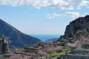 El Almendro y la Montaña