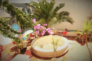 obrázek - Hostel The White Butterfly
