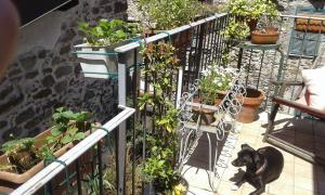 Casa Med Holiday Home, Ferienhäuser  Isolabona - big - 38