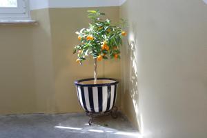 il 23 Holiday Home, Ferienhäuser  La Spezia - big - 50