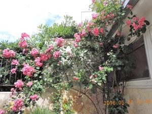 Apartments Villa Tanja, Ferienwohnungen  Trogir - big - 10