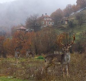 Villa Fauna