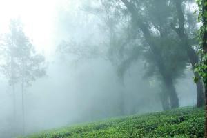 Misty Mountain Plantation Resort, Hotels  Pīrmed - big - 11