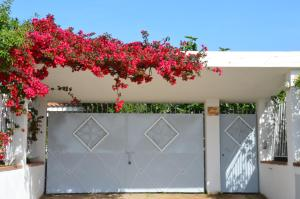 Villa Margherita, Holiday homes  Capo Vaticano - big - 43