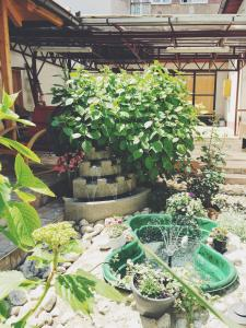 Guest house Nizama's Place - фото 3