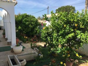 Esperanza, Guest houses  Torrevieja - big - 24