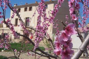 Mas Taniet Hotel Rural, Загородные дома  Benissanet - big - 31