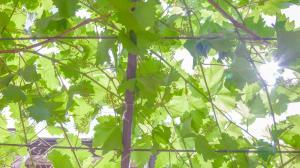 Гостевой дом Виноградная лестница - фото 26
