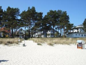 Strandläufer im Haus Strelasund