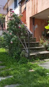 Pin de stèlle, Bed & Breakfasts  San Martino - big - 14
