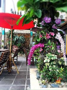 Panda House Chiang Mai