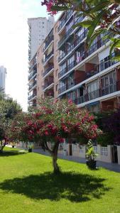Apartment Hannibal Benidorm, Ferienwohnungen  Cala de Finestrat - big - 18