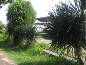 Гостевой дом Мила - фото 9