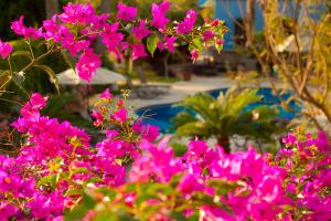 El Encanto Inn & Suites, Отели  Сан-Хосе-дель-Кабо - big - 45