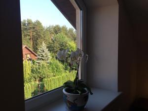 Comfort Apartment, Ferienwohnungen  Vilnius - big - 7