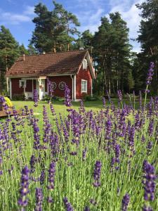 Villa Hanson, Prázdninové domy  Elbiku - big - 38