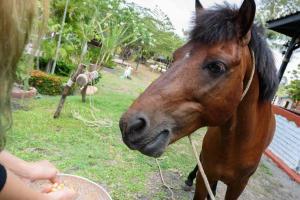 73265397 Cowboy Farm Resort Pattaya พัทยา