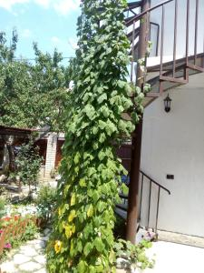 Guest House Granat, Penzióny  Kabardinka - big - 24
