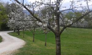 Parco di San Floriano