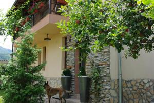 Guesthouse Viktoria