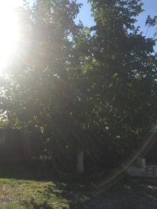 База отдыха На Агрба 32 - фото 9