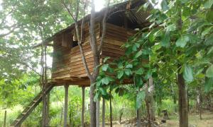 Angry Birds Tree house, Homestays  Habarana - big - 34
