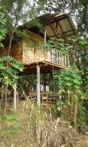 Angry Birds Tree house, Homestays  Habarana - big - 4