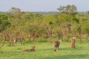 Buffelshoek Tented Camp, Люкс-шатры  Manyeleti Game Reserve - big - 6