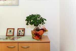 Apartments Jadranka 1705, Апартаменты  Каштела - big - 12