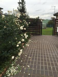 Macquarie Lodge, Ferienhäuser  Mudgee - big - 18