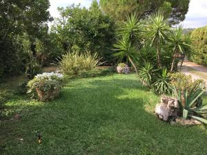 Il Giardino di Armida, Bed and breakfasts  Salerno - big - 36