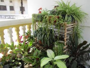 Zanzibar Green Home (Annex 2 Hotel)