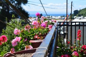 Colores del Puerto, Bed and breakfasts  Puerto Montt - big - 27