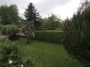 Ferienwohnung Natura, Appartamenti  Baden-Baden - big - 7