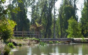 Saladin Lodge, Отели типа «постель и завтрак»  Narbethong - big - 40