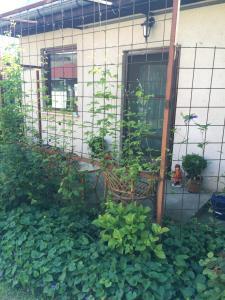 B&B Garden house
