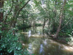 Donauer im Altmühltal - Greding