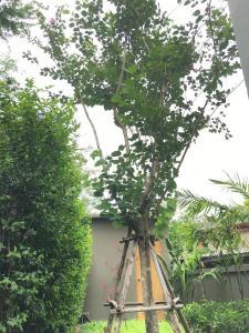 Tandeaw View, Hotely  Hua Hin - big - 61