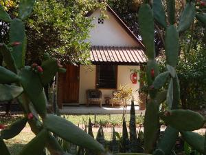 Green Tree Lodge, Lodges  Livingstone - big - 6