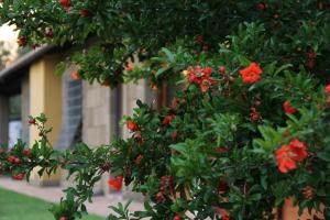 Al Vecchio Fontanile B&B, Bed and breakfasts  Ladispoli - big - 61