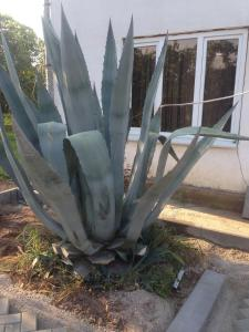 Гостевой дом На Абазинской - фото 20