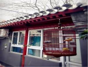 Free Builder Courtyard Hostel