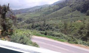Cool Mount Guest, Homestays  Nuwara Eliya - big - 36
